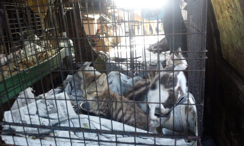 【移動先募集】現場に遺棄された秋田犬・雑種犬・子猫たち_f0242002_2334527.jpg