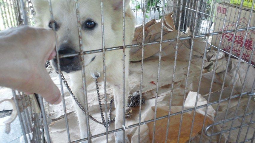 【移動先募集】現場に遺棄された秋田犬・雑種犬・子猫たち_f0242002_2502928.jpg