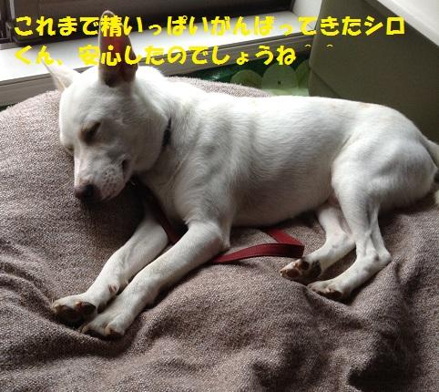 f0121712_23305965.jpg