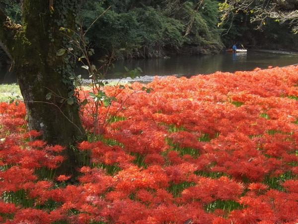 秋の祝福 ~赤の群生地~_c0141013_20382494.jpg