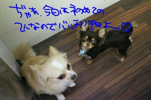 映画_b0130018_00355530.jpg