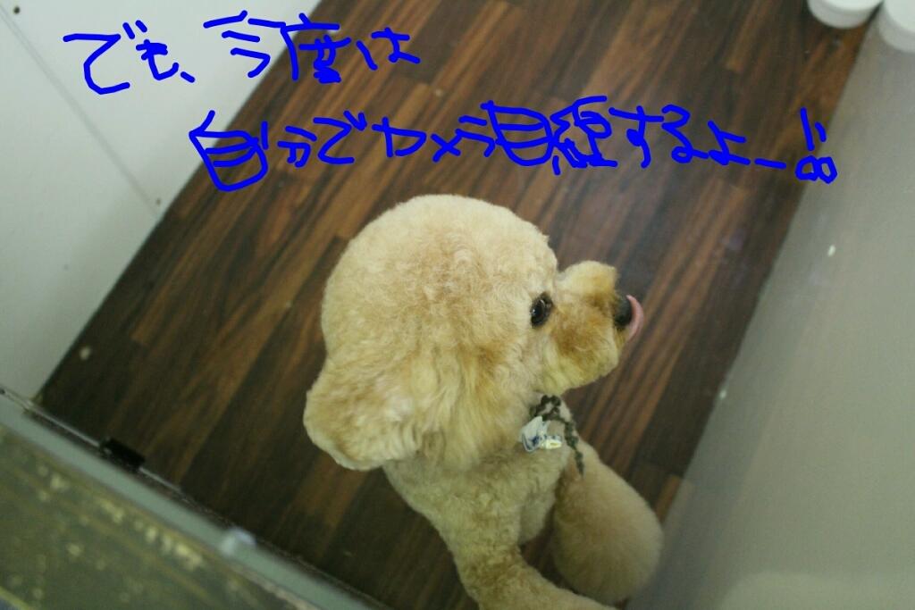 映画_b0130018_00373026.jpg