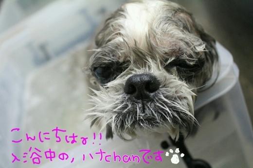 可愛い~_b0130018_01385934.jpg