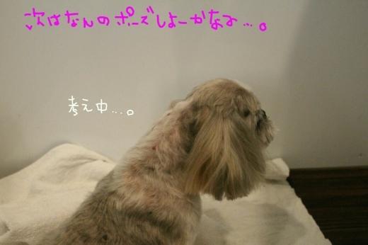 可愛い~_b0130018_01391258.jpg