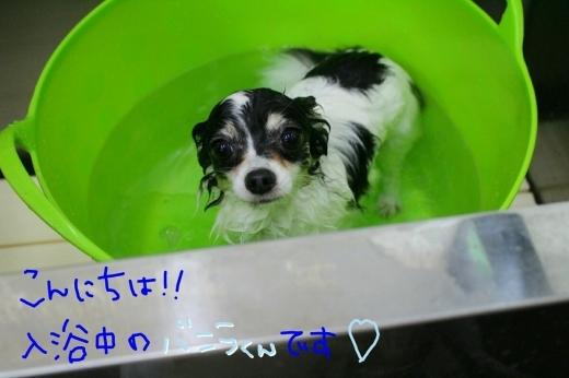 可愛い~_b0130018_01391959.jpg