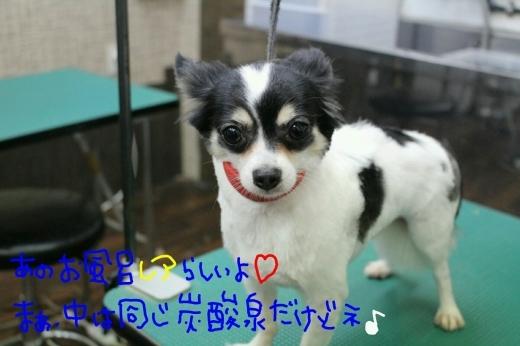 可愛い~_b0130018_02004609.jpg