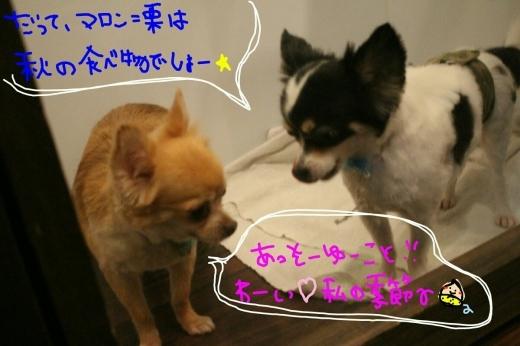 可愛い~_b0130018_02005376.jpg