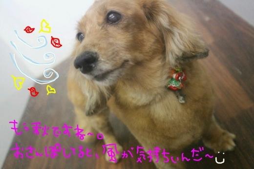 可愛い~_b0130018_23181414.jpg