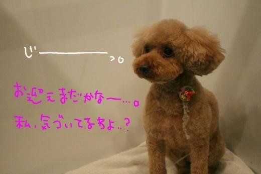可愛い~_b0130018_23183113.jpg