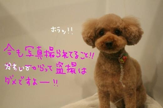 可愛い~_b0130018_23183557.jpg