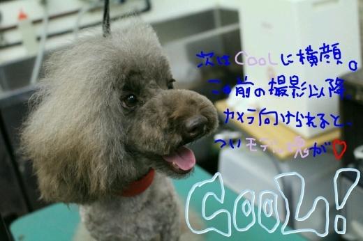 可愛い~_b0130018_23450109.jpg