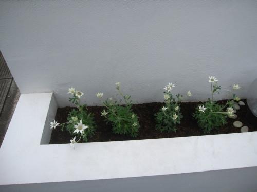 花壇のころもがえ_e0350927_11554722.jpg