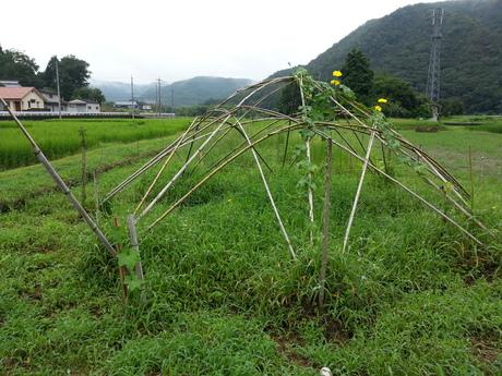 徳島から岡山へ移動して・・・_c0226146_10275715.jpg