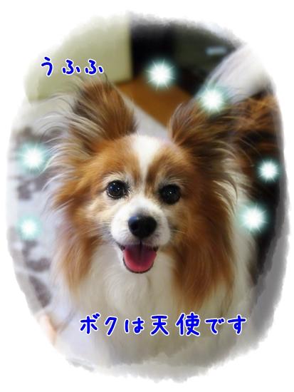 d0013149_23101666.jpg