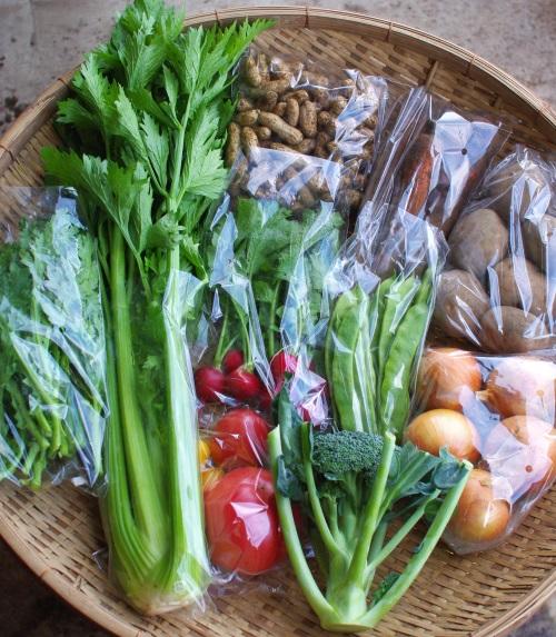 今週の野菜セット(9/22~9/26着)_c0110869_13165280.jpg