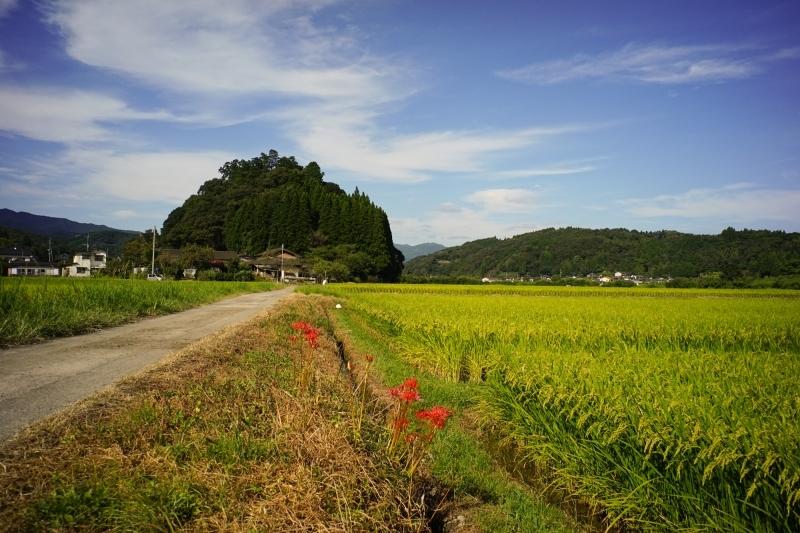 日本遺産 人吉球磨 雨宮神社 トトロの森_c0338787_16172579.jpg