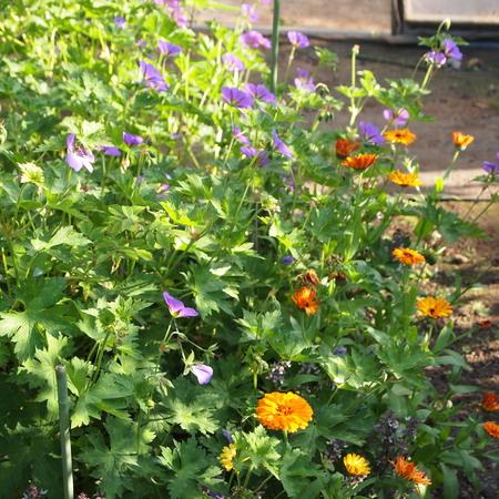 新しくお庭を作る方へ_a0292194_1253772.jpg