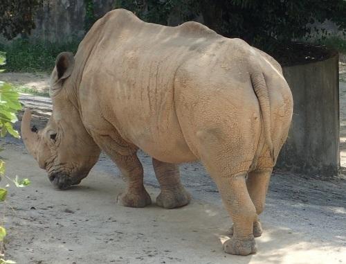 福岡市動物園&植物園は面白い!_a0315918_18461126.jpg