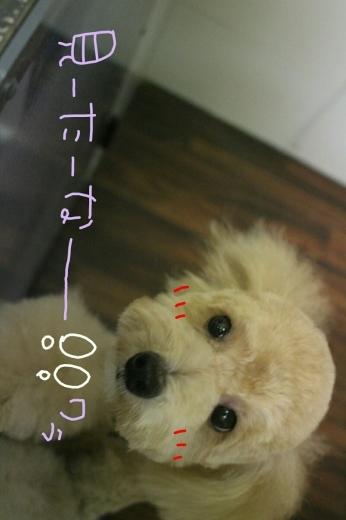 CoCo壱。_b0130018_14515962.jpg