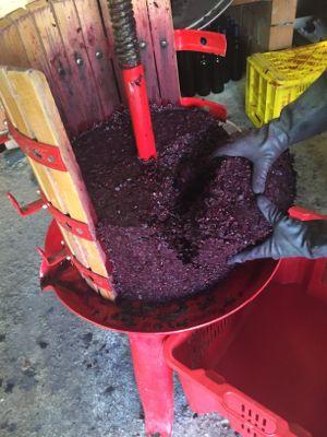 赤葡萄のトルキオ絞り_d0136540_333622.jpg