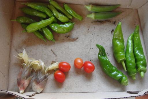 夏野菜_e0226943_23114983.jpg