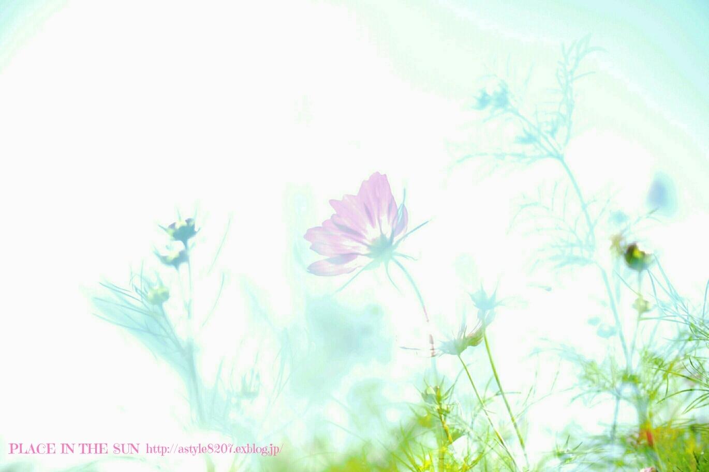 f0310867_20115069.jpg