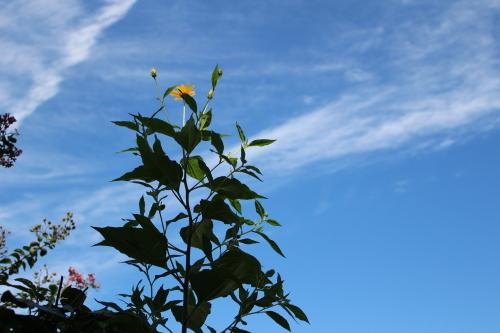 青空に向かって_a0125981_14102087.jpg