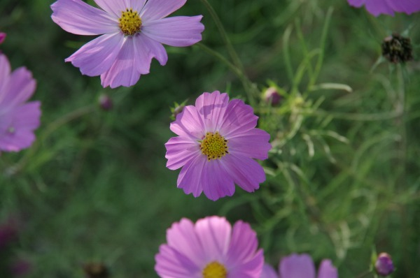 [PART1] Azumino Autumn Aster_b0078188_20442479.jpg