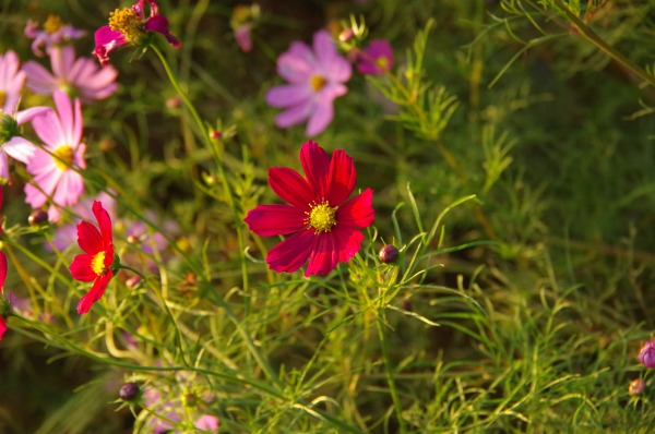 [PART2] Azumino Autumn Aster_b0078188_2049213.jpg