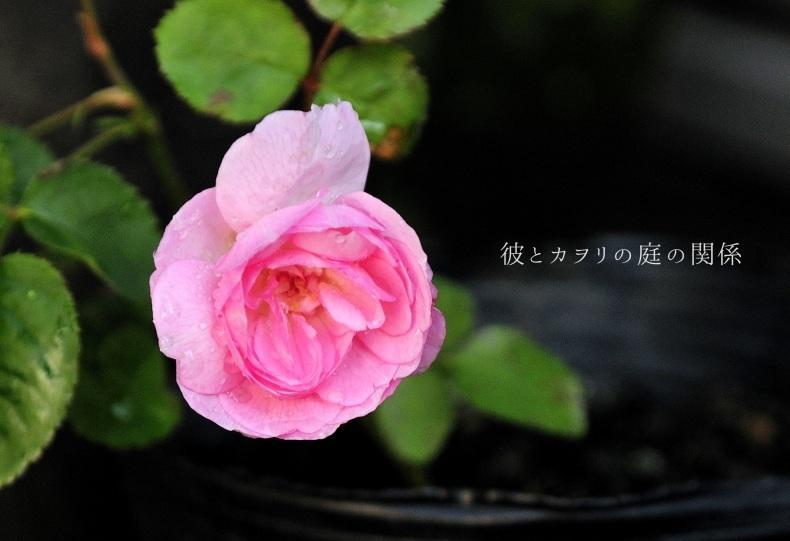 c0365716_20580477.jpg