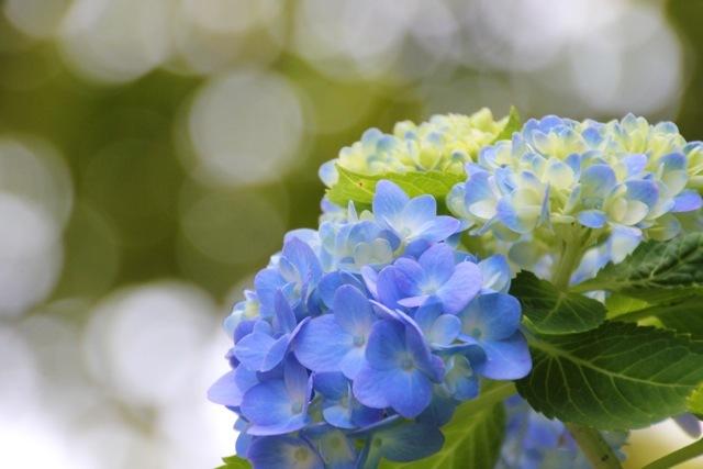 【くりはま花の国】_f0348831_22550670.jpg