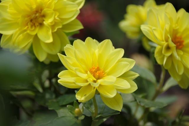 【くりはま花の国】_f0348831_22581882.jpg