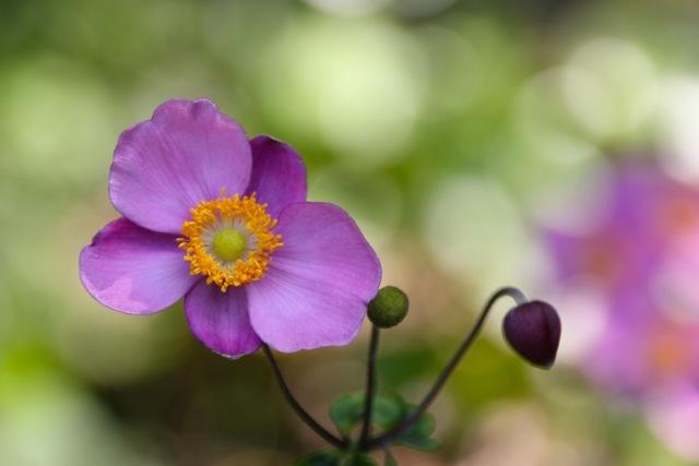 【くりはま花の国】_f0348831_22583673.jpg