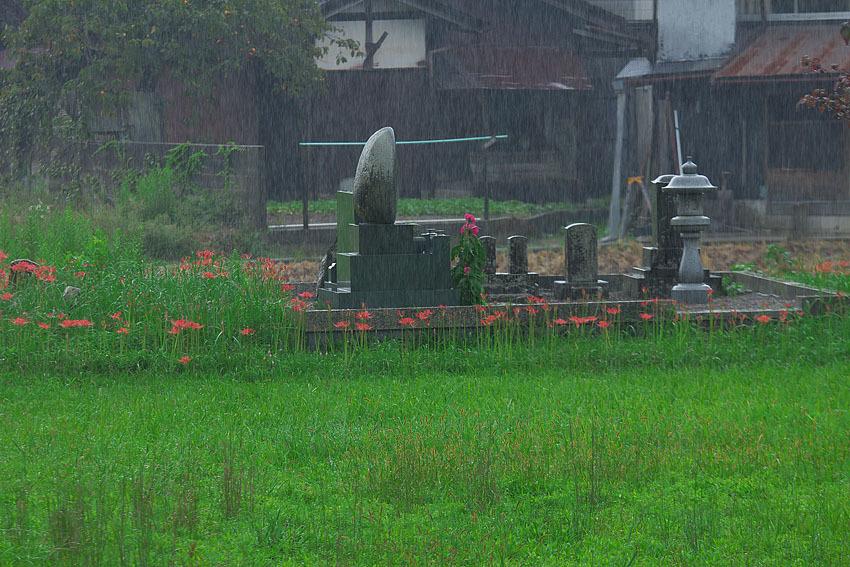彼岸花~雨に咲く~_c0067040_22421323.jpg