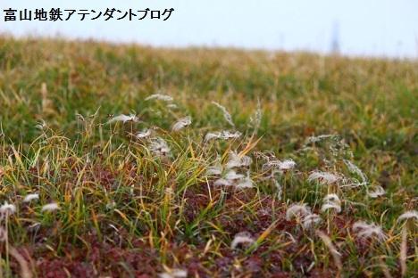 紅葉シーズンの立山へ_a0243562_13434592.jpg