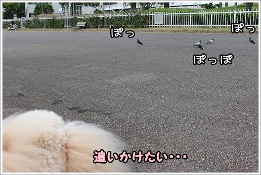 b0111376_1705772.jpg