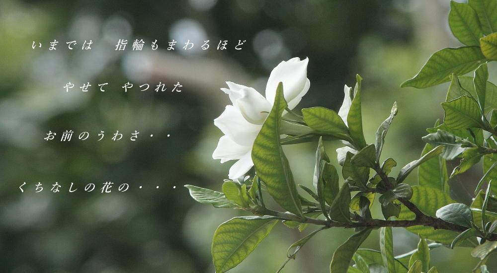 c0357781_14030141.jpg