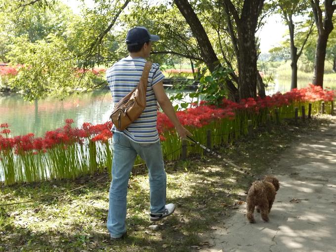 チョコとお散歩にオアシスパークへGO!_e0159185_9182228.jpg