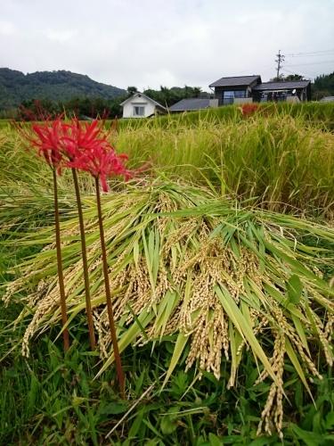 SW3日目 棚田・湖・滝・ワイン工場_e0298288_16260361.jpg