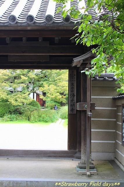 鎌倉 浄光明寺_c0087094_21133489.jpg