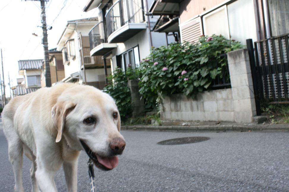 トップじいさんのお散歩_f0242002_2354645.jpg