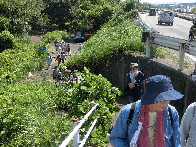 暑い中250人以上の皆さんに参加いただいた「のんびり 彼岸花ウォーク」_f0141310_7295052.jpg