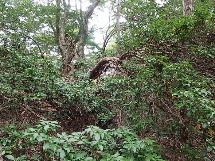 犬伏山登山_c0116915_0442052.jpg