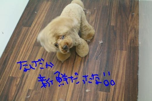 秋_b0130018_22400845.jpg