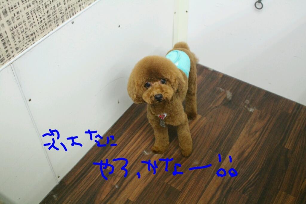 秋_b0130018_23110780.jpg