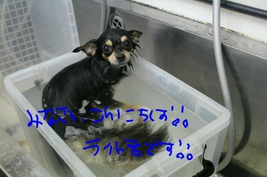 秋_b0130018_23111053.jpg