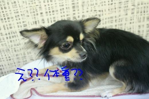 秋_b0130018_23151045.jpg