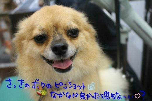 中華まん_b0130018_23531243.jpg