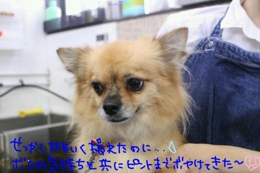 中華まん_b0130018_23554545.jpg