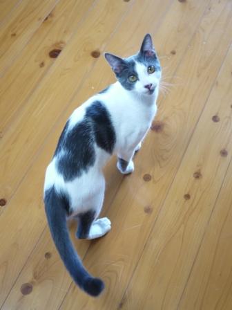 猫のお留守番 ルナくん編。_a0143140_1653613.jpg